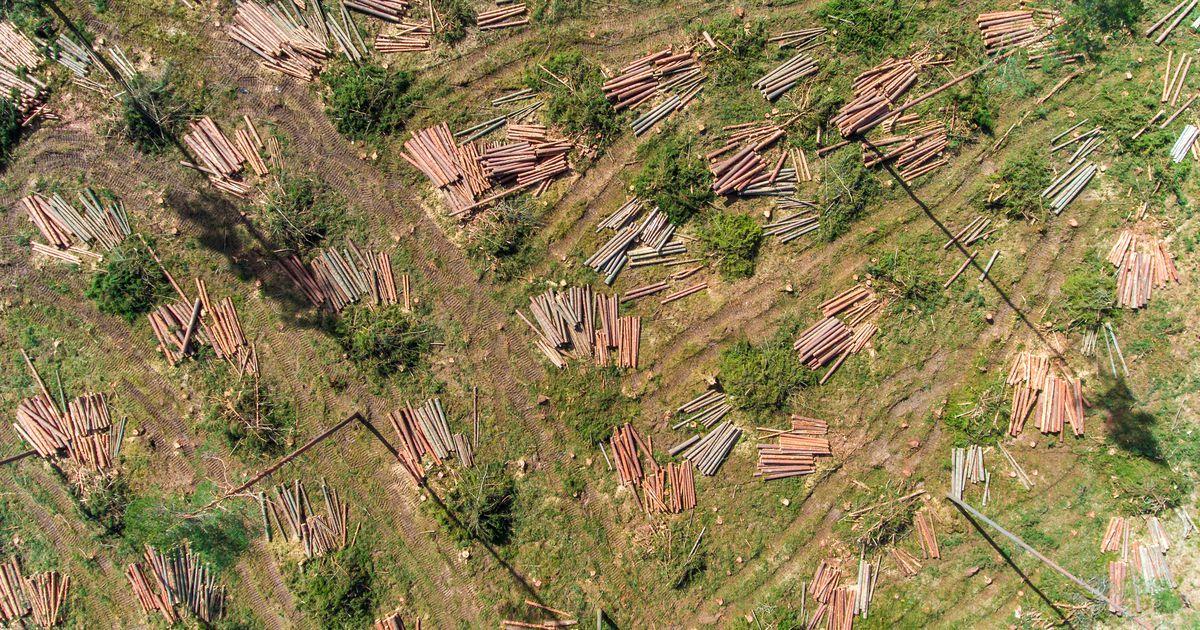 Õiguskantsler: riik ei saa panna keskkonna kaitsmisel kogu vastutust raietööde tegijale