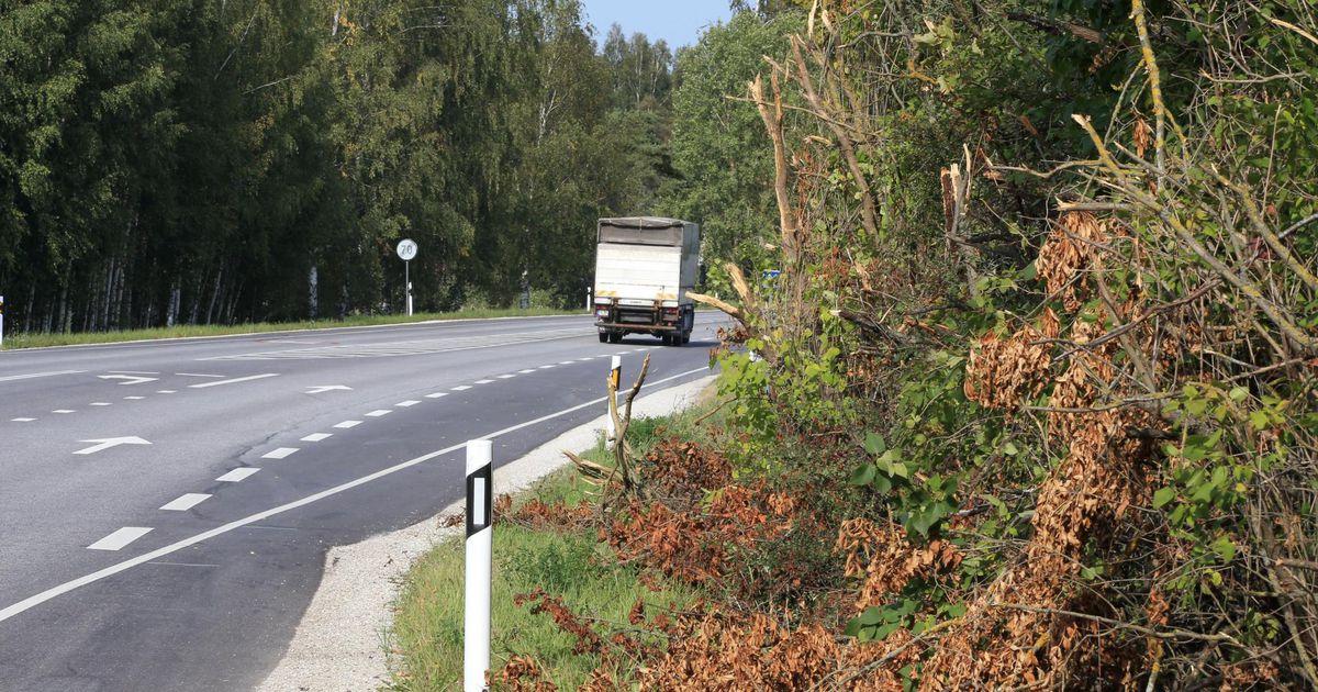 Maanteeamet kutsub puude rüüstajaid korrale