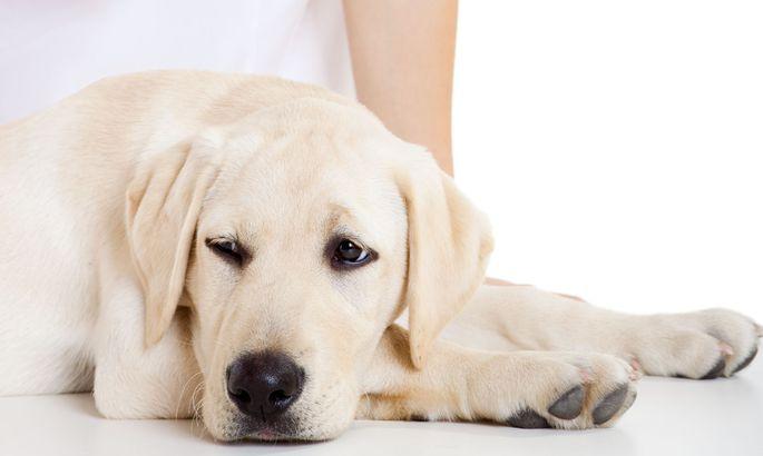 a0e728f6537 W3 uudised - Männimäe loomakliinikus tehti koerale haruldane operatsioon