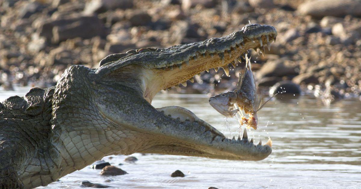 вовсе картинка крокодила и его детеныша перекладине подтягивания