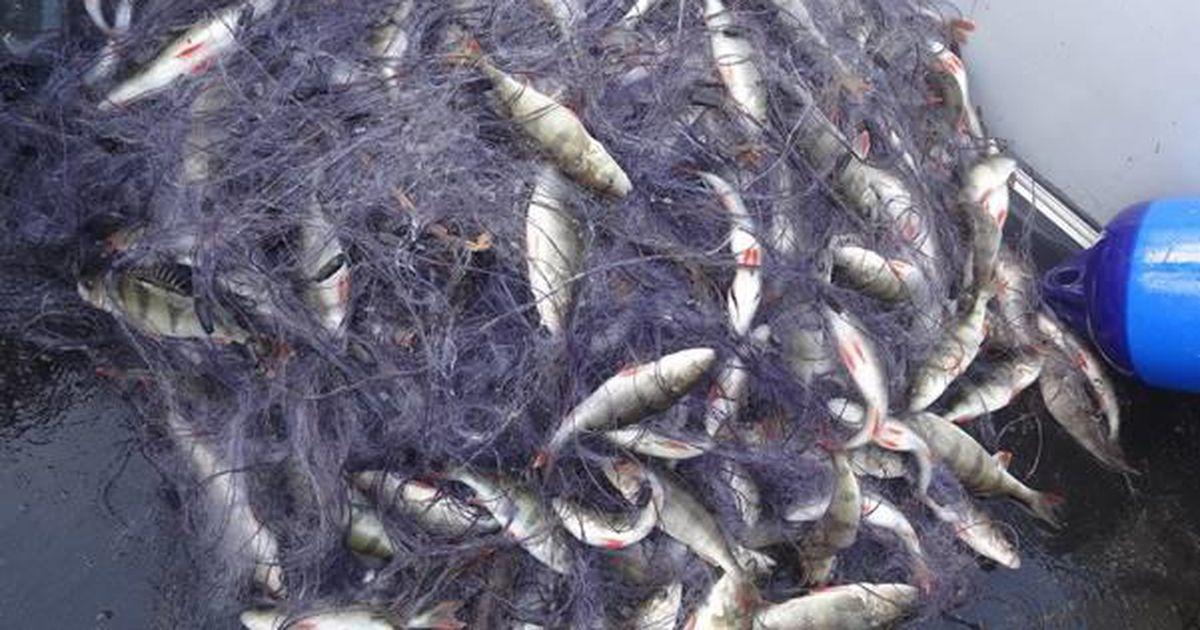 Peipsi järvest eemaldati koristustalgutel ligi 700 nakkevõrku