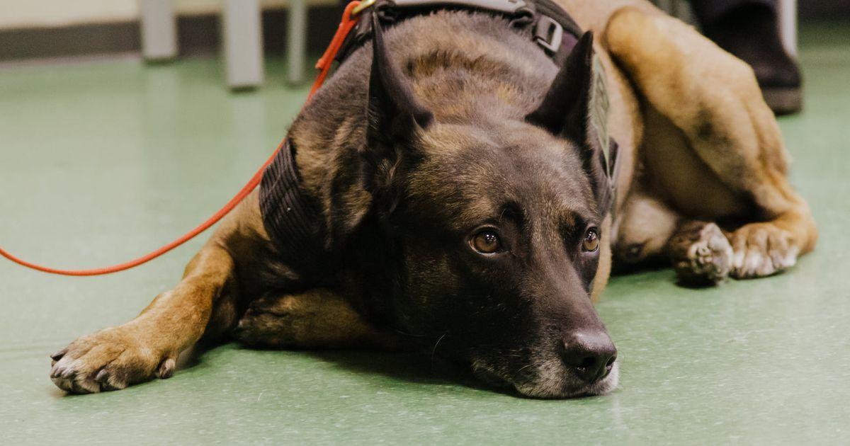 Fotod: PPA valis välja parima teenistuskoera ja koerajuhi