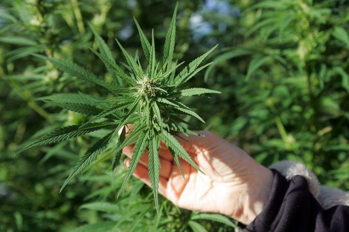 Хранилище для марихуаны марихуану курит