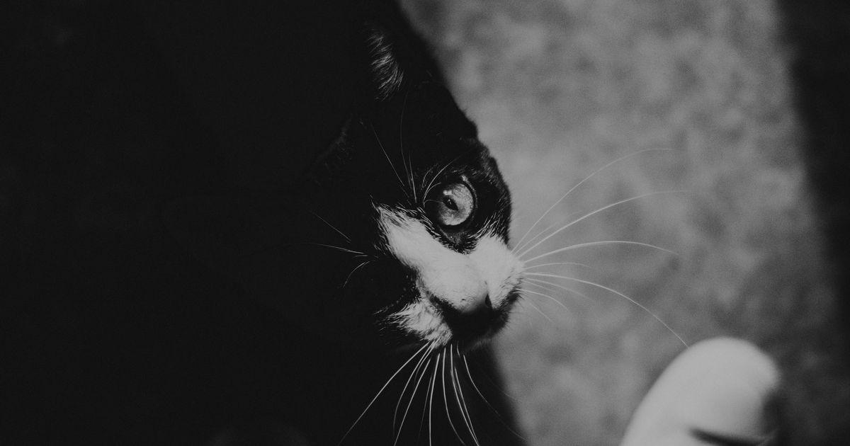 Galerii: varjupaigas algas musta kassi kuu