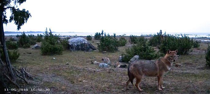 a0fdfba17d8 Eesti looduskaameraid jälgitakse üle maailma - Maa Elu