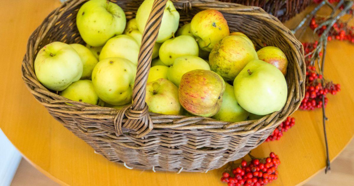 Tähtverelased ei lase ilmal end häirida ning avavad täna ikka oma õunaõued