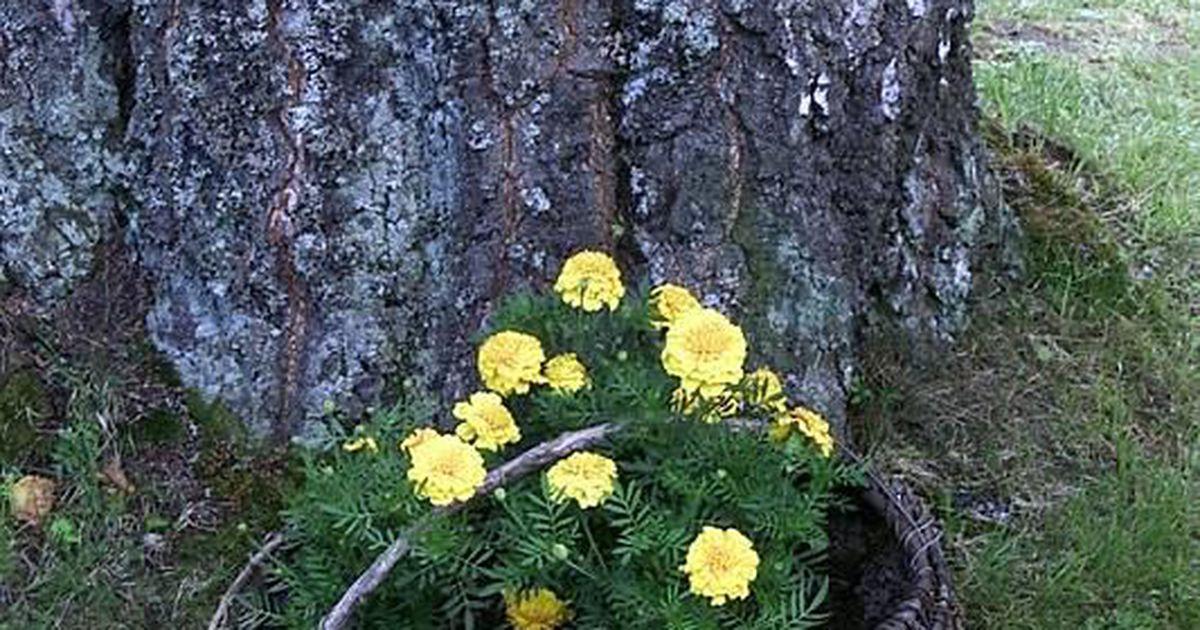 0fd4e9691f3 Üleskutse: saada pilt oma nutikast lillepeenrast või – potist - Arhiiv -  Tarbija